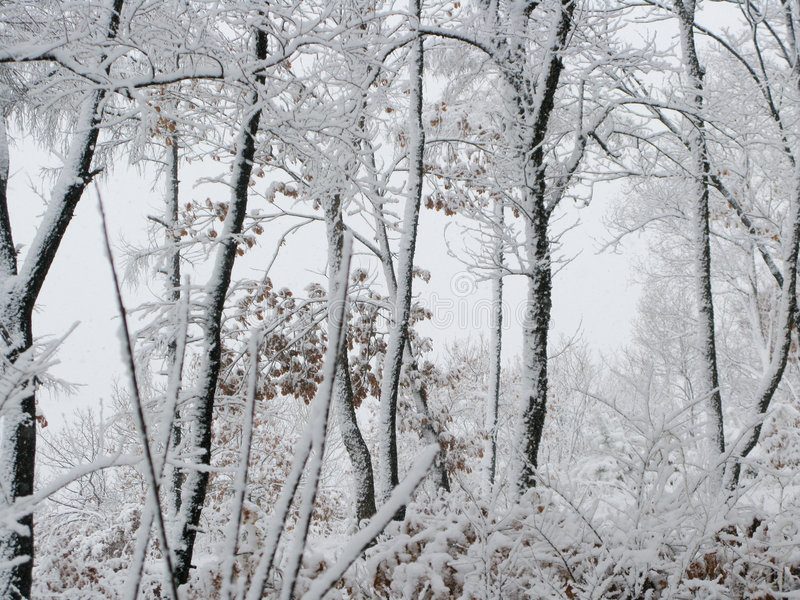 καλυμμένα δάση χιονιού στοκ φωτογραφία με δικαίωμα ελεύθερης χρήσης