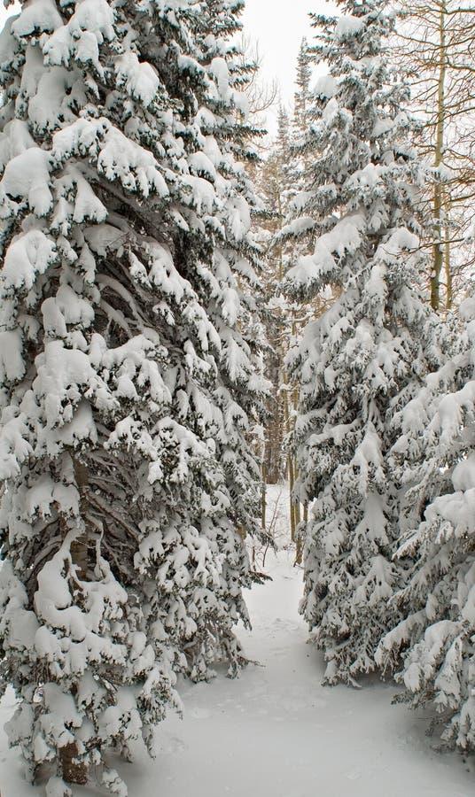 Download καλυμμένα δέντρα χιονιού στοκ εικόνες. εικόνα από ερυθρελάτες - 380288