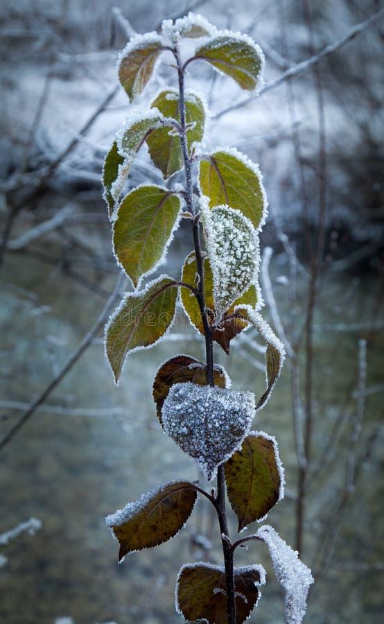 Καλυμμένα παγετός λουλούδια σε garmisch-Partenkirchen, Γερμανία στοκ φωτογραφία με δικαίωμα ελεύθερης χρήσης