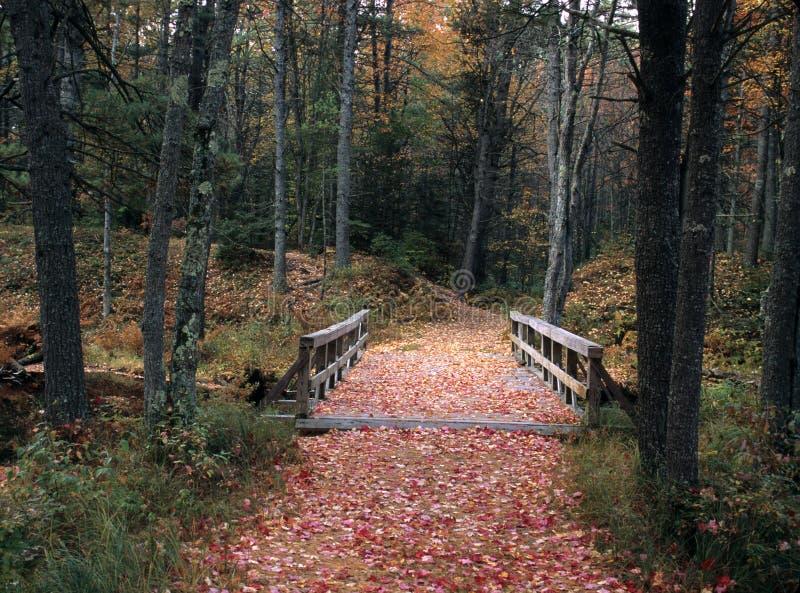Καλυμμένη φύλλο γέφυρα στοκ φωτογραφία