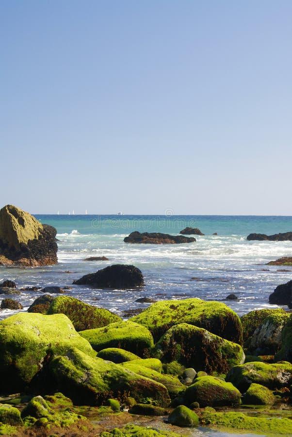 καλυμμένοι βράχοι βρύου στοκ φωτογραφία