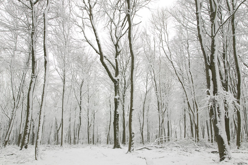 καλυμμένοι κορμοί δέντρων χιονιού στοκ φωτογραφία