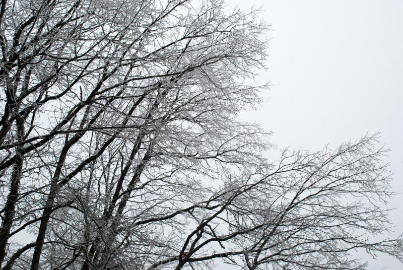 Καλυμμένοι πάγος κλάδοι δέντρων στοκ φωτογραφία