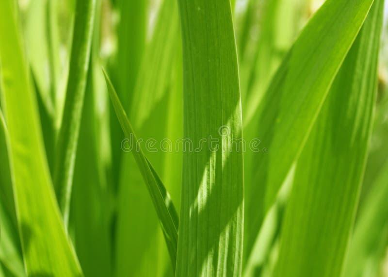 καλυμμένος ήλιος άνοιξη χλόης πράσινος στοκ φωτογραφίες με δικαίωμα ελεύθερης χρήσης
