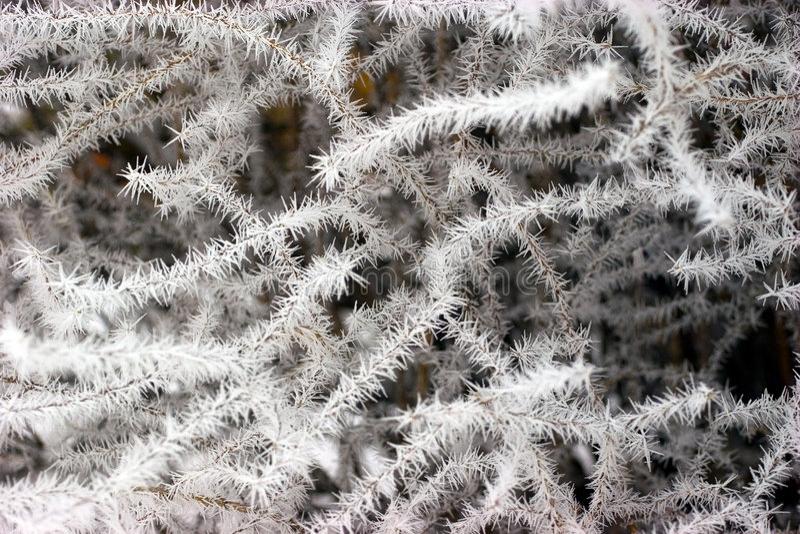 καλυμμένος κλάδοι παγετός στοκ φωτογραφία