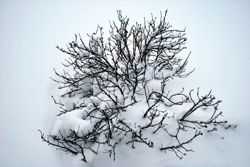 καλυμμένο θάμνος χιόνι Αναμονή την άνοιξη στοκ φωτογραφίες