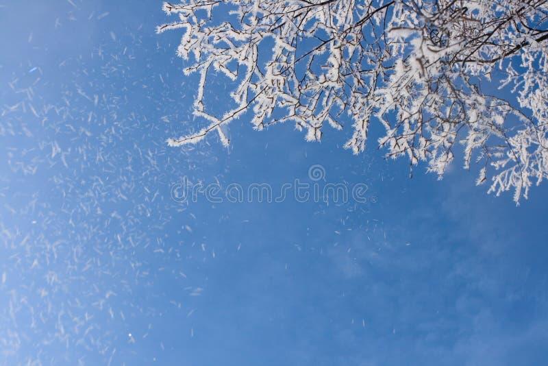 καλυμμένο κλάδος χιόνι πα& στοκ εικόνες