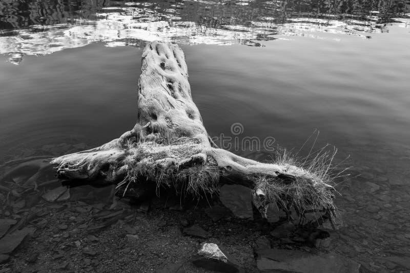 Καλυμμένο παγετός δέντρο στο ST Moritz στοκ εικόνες