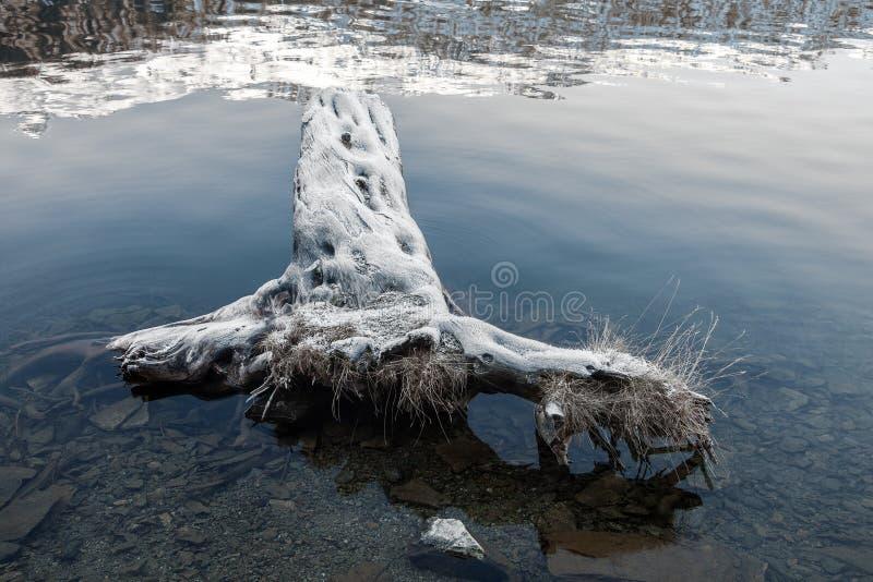 Καλυμμένο παγετός δέντρο στο ST Moritz στοκ εικόνες με δικαίωμα ελεύθερης χρήσης