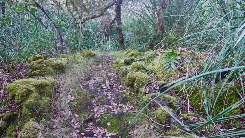 Καλυμμένο φύλλο ίχνος περπατήματος στο νησί Rangitoto στοκ φωτογραφία με δικαίωμα ελεύθερης χρήσης