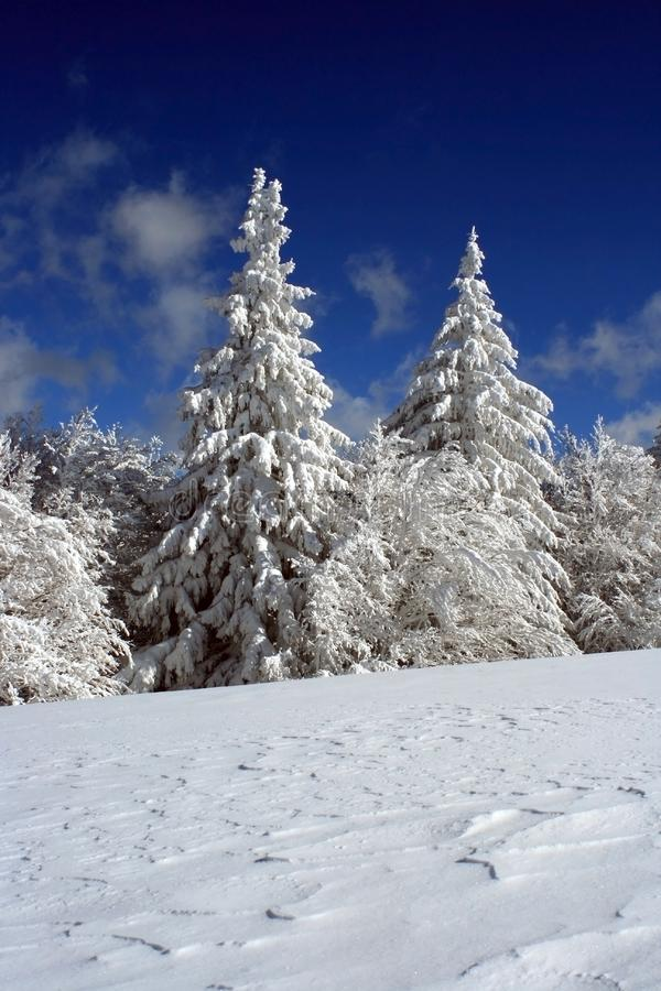 καλυμμένο χιόνι