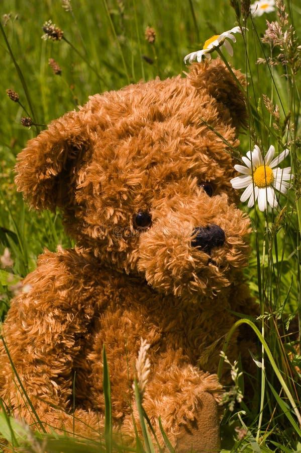 καλός teddybear χλόης στοκ εικόνες