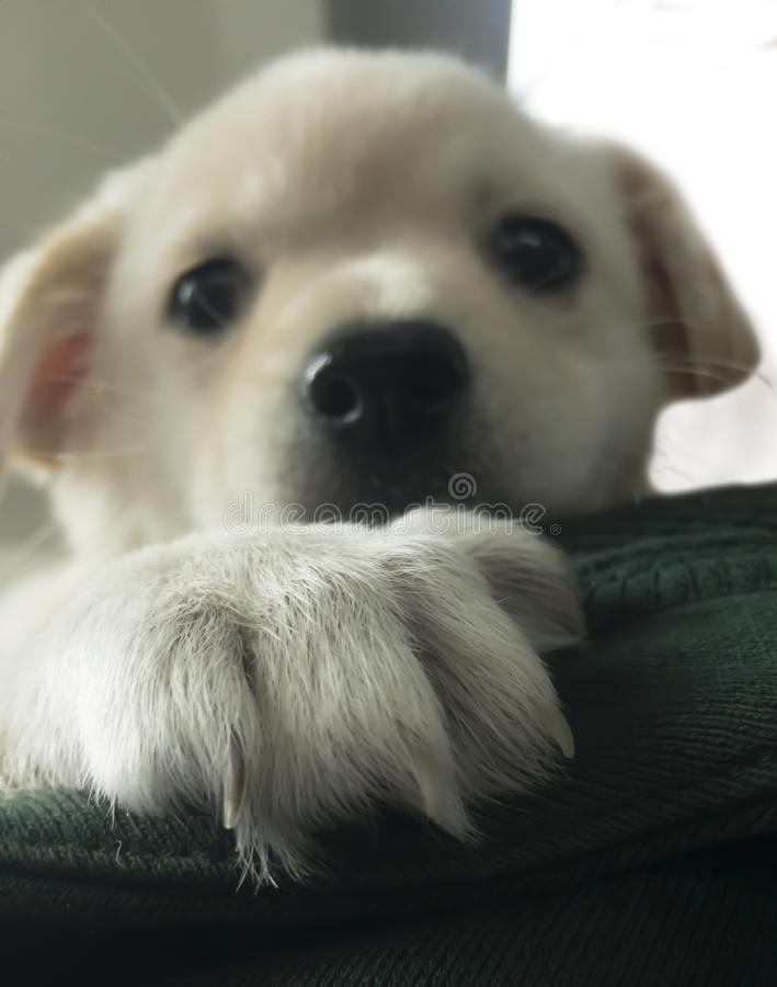 Καλό άσπρο σκυλί στοκ φωτογραφίες