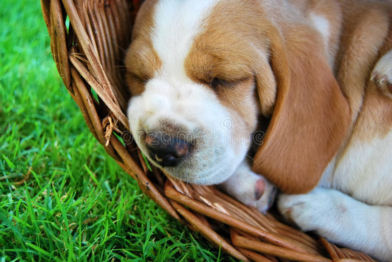 καλό πορτρέτο σκυλιών στοκ φωτογραφία