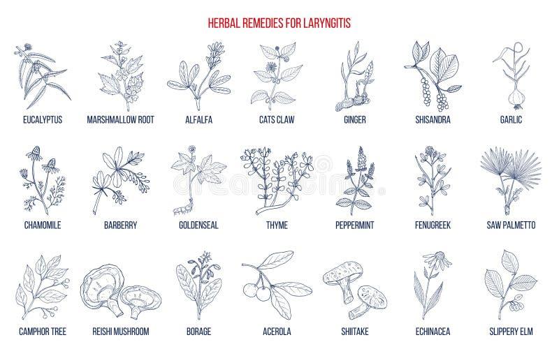 Καλύτερες βοτανικές θεραπείες για το laryngitis ελεύθερη απεικόνιση δικαιώματος