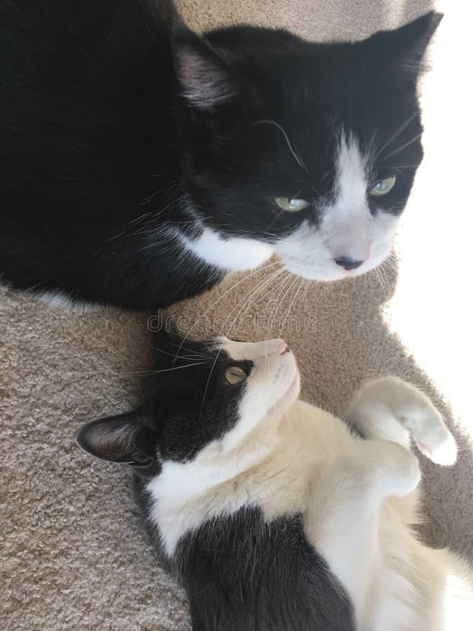 Καλύτεροι φίλοι γατών στοκ φωτογραφία με δικαίωμα ελεύθερης χρήσης