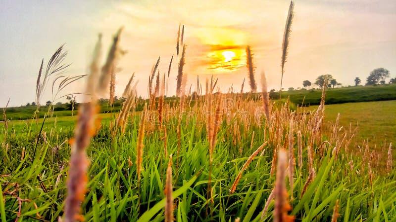 Καλύτερο ηλιοβασίλεμα στο ινδικό χωριό με τη χλόη στοκ εικόνα με δικαίωμα ελεύθερης χρήσης
