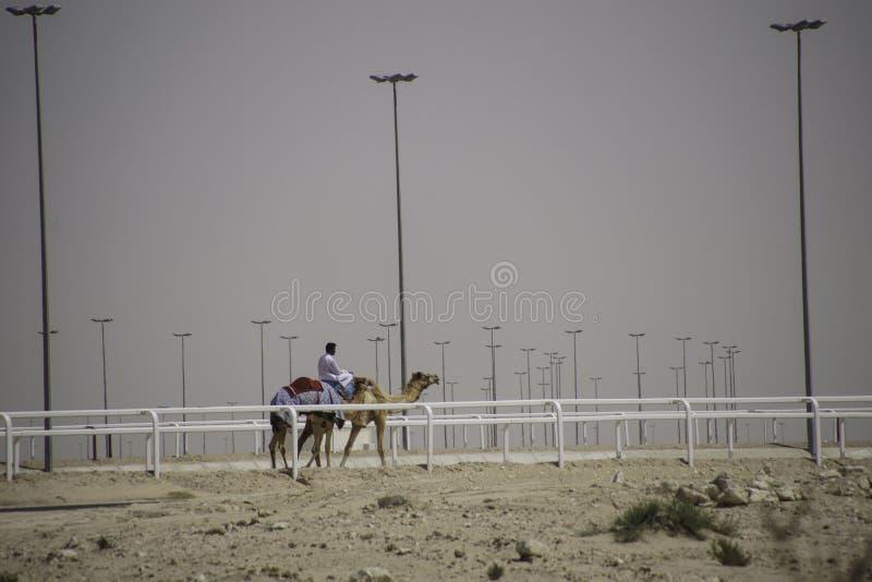 Καμήλα οδήγησης ατόμων στη διαδρομή φυλών στο Κατάρ στοκ εικόνες με δικαίωμα ελεύθερης χρήσης