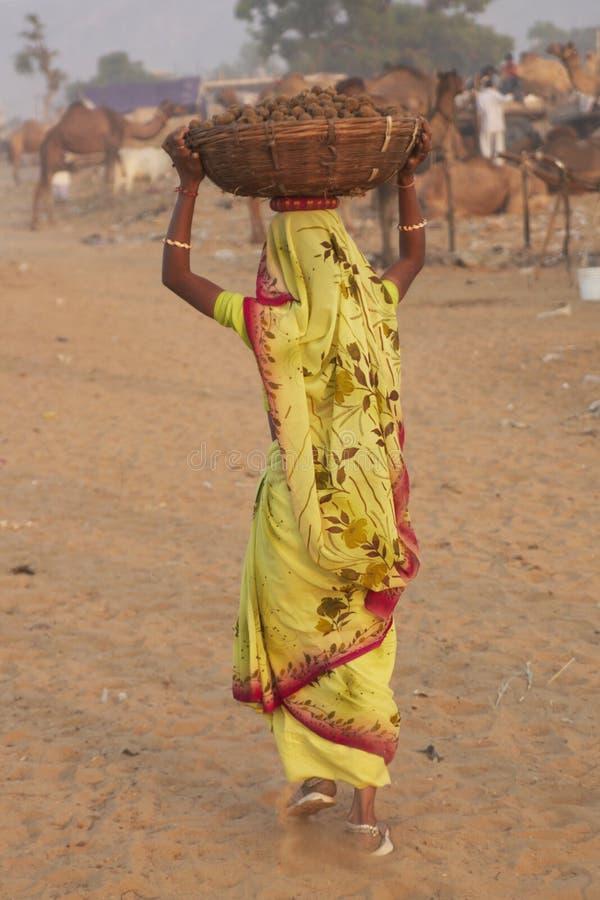 καμήλα που συλλέγει την & στοκ εικόνες με δικαίωμα ελεύθερης χρήσης