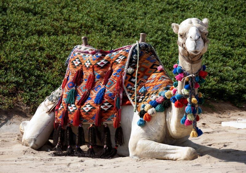 Download καμήλα στοκ εικόνες. εικόνα από έρημος, αφρική, φύση - 13187260