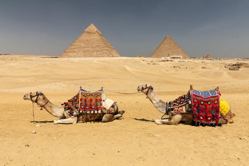 Καμήλες στην πυραμίδα Giza σύνθετη, Κάιρο, Αίγυπτος στοκ εικόνες με δικαίωμα ελεύθερης χρήσης