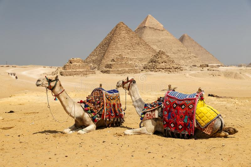Καμήλες στην πυραμίδα Giza σύνθετη, Κάιρο, Αίγυπτος στοκ φωτογραφίες με δικαίωμα ελεύθερης χρήσης