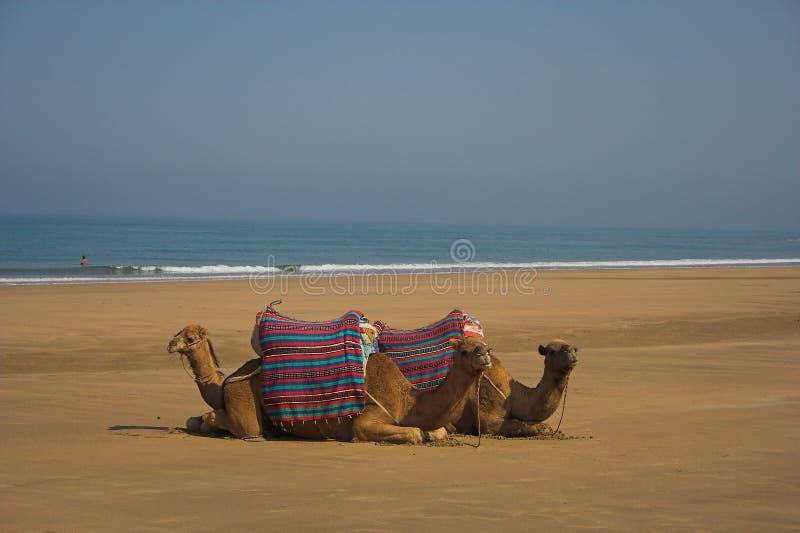 Download καμήλες στοκ εικόνα. εικόνα από έρημος, καμήλες, ουρανός - 1537623