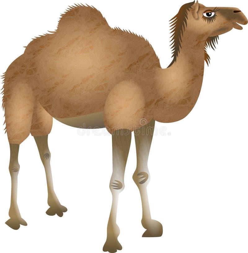 Καμήλα ερήμων κινούμενων σχεδίων διανυσματική απεικόνιση