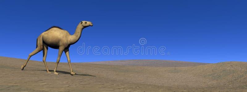 Καμήλα που περπατά - τρισδιάστατη δώστε απεικόνιση αποθεμάτων