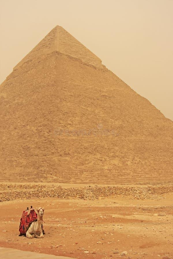 Καμήλα που στηρίζεται κοντά στην πυραμίδα Khafre, Κάιρο στοκ φωτογραφίες