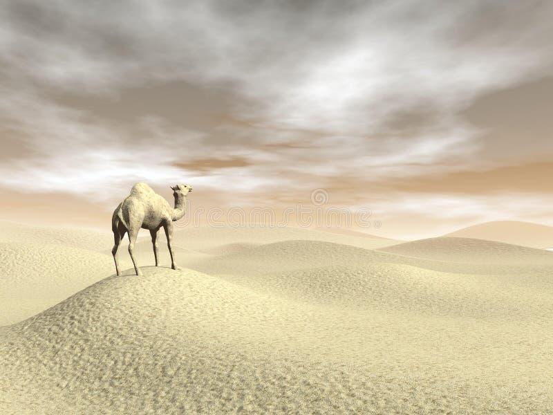 Καμήλα στην έρημο - τρισδιάστατη δώστε διανυσματική απεικόνιση