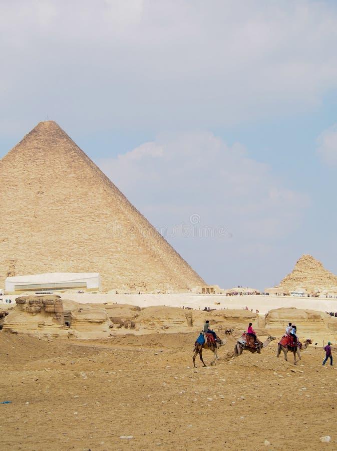 Καμήλες στις πυραμίδες Giza στοκ εικόνα