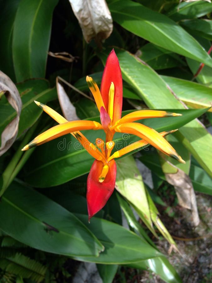 Καμμένος λουλούδι στοκ εικόνα