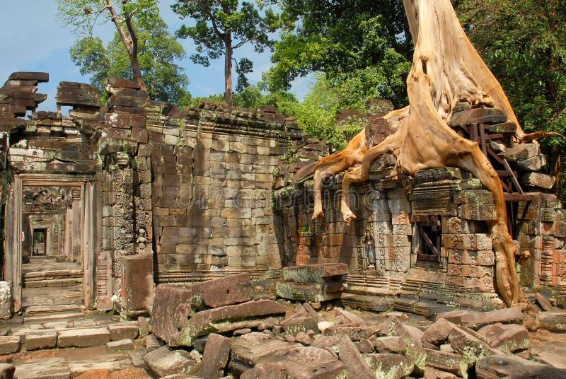 Καμπότζη, Siem Reap, Angkor, Preah Khan, Ινδουιστικός ναός στοκ φωτογραφία με δικαίωμα ελεύθερης χρήσης