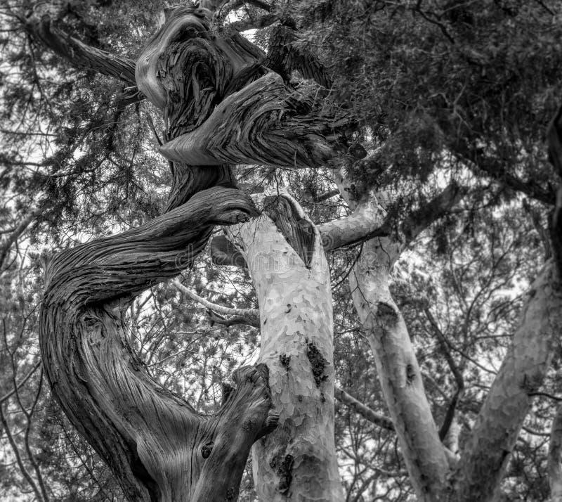 Καμπύλες και γραμμές στη φύση στοκ εικόνες