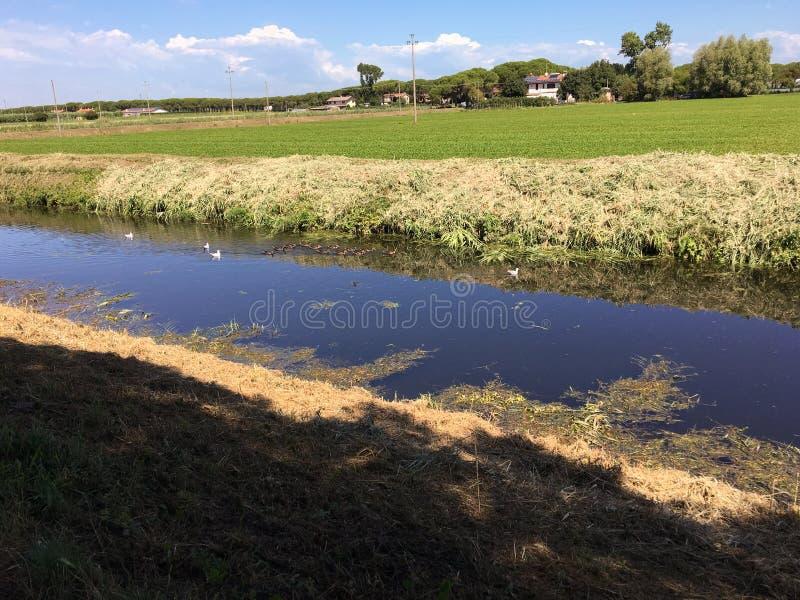 Κανάλι έλους με τα πουλιά νερού σε Bibione, Βένετο, Ιταλία στοκ εικόνες