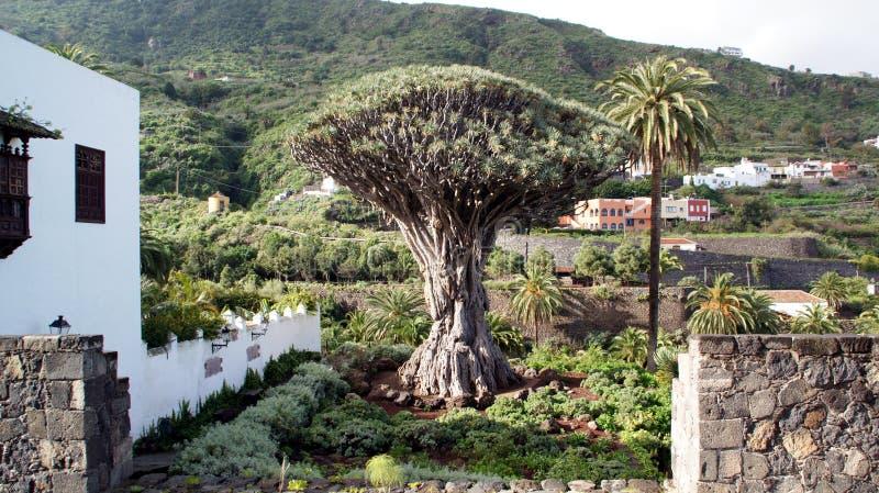 Κανάρια νησιά Ισπανία tenerife στοκ φωτογραφία με δικαίωμα ελεύθερης χρήσης
