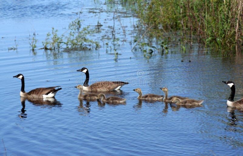 καναδική οικογενειακή & στοκ εικόνα με δικαίωμα ελεύθερης χρήσης