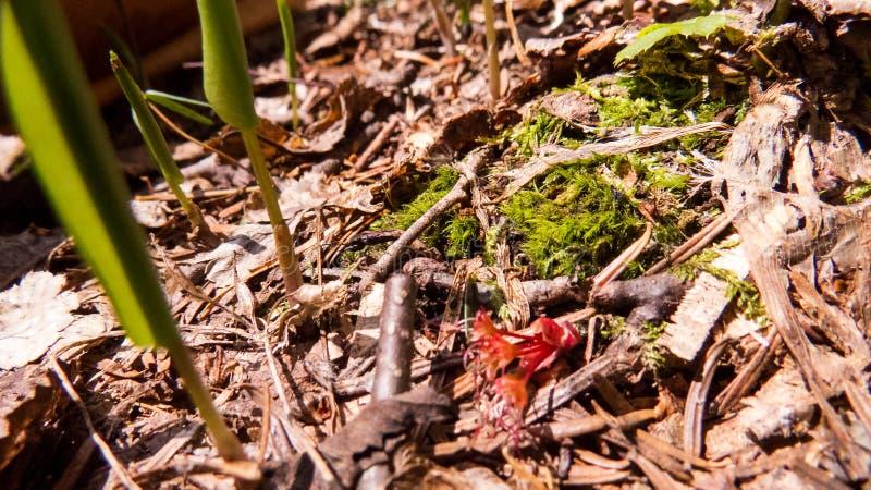 Καναδικό δάσος: Φυσικό έδαφος στο φως του ήλιου στοκ φωτογραφία με δικαίωμα ελεύθερης χρήσης