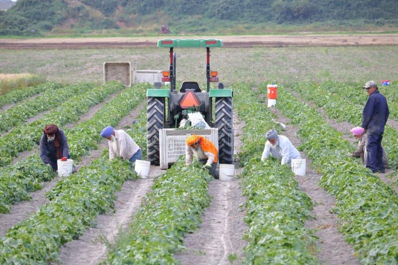 Καναδικοί σιχ αγρότες στοκ εικόνες