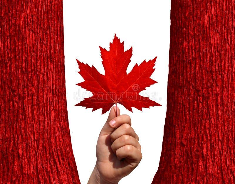 Καναδικό φθινόπωρο ελεύθερη απεικόνιση δικαιώματος