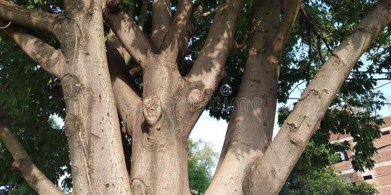 Κανονικός πυροβολισμός από τις πλευρές δέντρων στοκ φωτογραφίες