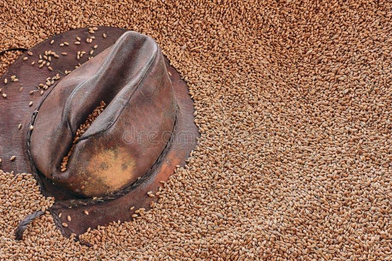 Καπέλο κάουμποϋ δέρματος στα σιτάρια σίτου Τοπ άποψη, σύσταση σιταριών σίτου στοκ φωτογραφίες με δικαίωμα ελεύθερης χρήσης