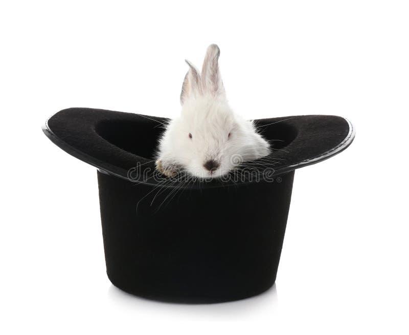 Καπέλο μάγων με το χαριτωμένο κουνέλι στο άσπρο υπόβαθρο στοκ φωτογραφία με δικαίωμα ελεύθερης χρήσης