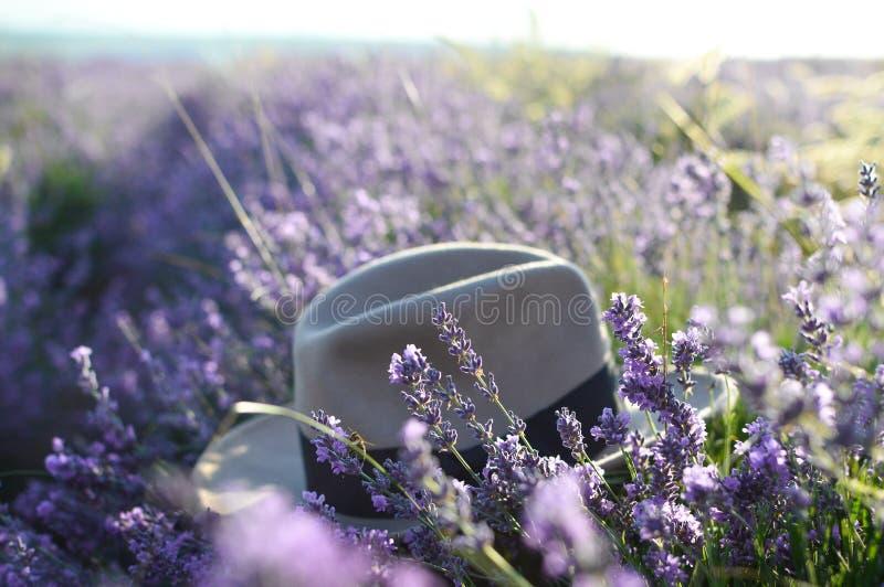 Καπέλο σε έναν lavender τομέα, εκλεκτική εστίαση Ανατολή σε έναν lavender τομέα Έννοια του ταξιδιού, ελεύθερος χρόνος, ομορφιά o  στοκ εικόνα με δικαίωμα ελεύθερης χρήσης