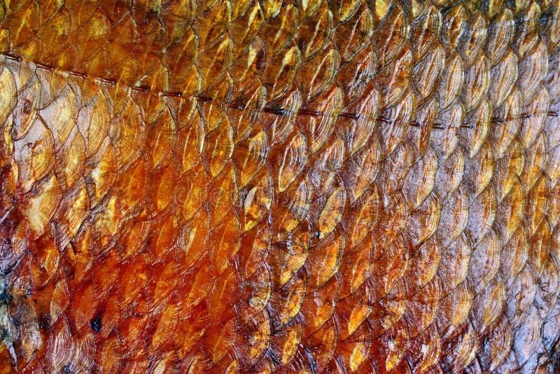 Καπνισμένες κλίμακες ψαριών στοκ φωτογραφία