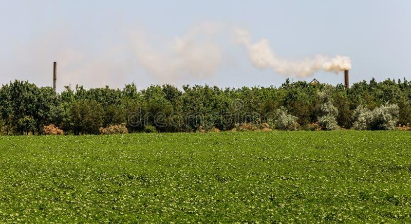 Καπνός, εκπομπές αερίων από έναν βιομηχανικό σωλήνα ενάντια στα πράσινα δέντρα Ρύπανση του περιβάλλοντος, βρώμικος βιομηχανικός α στοκ εικόνα με δικαίωμα ελεύθερης χρήσης