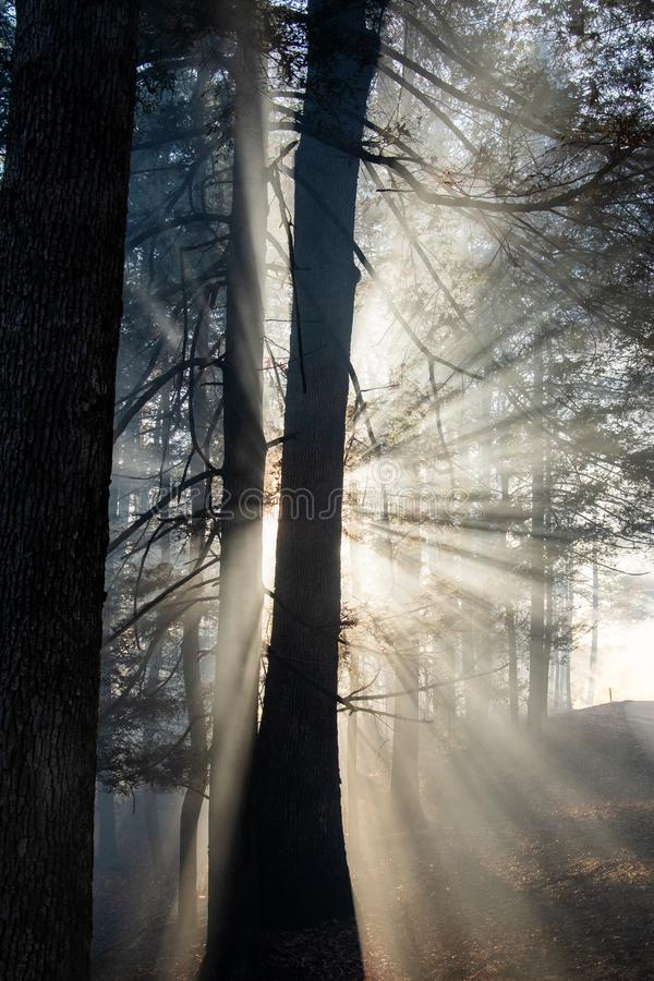 Καπνός μετά τις δασικές πυρκαγιές στοκ φωτογραφία με δικαίωμα ελεύθερης χρήσης