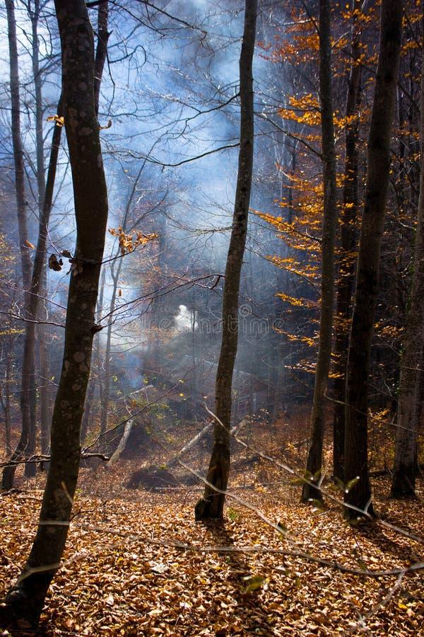 Καπνός στο δάσος στοκ εικόνες