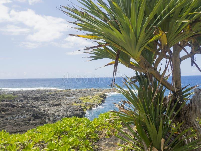 ΚΑΠ jaune στο νησί συγκέντρωσης στοκ φωτογραφία με δικαίωμα ελεύθερης χρήσης